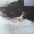 白黒ちゃん 3~4か月の子猫です♪