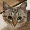シルバですさんのプロフィール画像