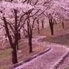 tuji009さんのプロフィール画像