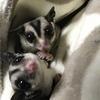猫侍さんのプロフィール画像