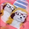 ネコ助さんのプロフィール画像
