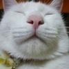 2NECOさんのプロフィール画像