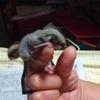 モモンガさんのプロフィール画像