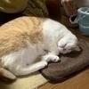 佑さんのプロフィール画像