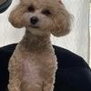りんりんさんのプロフィール画像