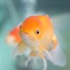 SHINさんのプロフィール画像