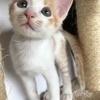 miyabiさんのプロフィール画像