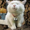 CATさんのプロフィール画像