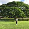 tikuhaさんのプロフィール画像