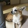 笹魚さんのプロフィール画像
