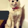 アッシーさんのプロフィール画像
