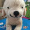 shimshmさんのプロフィール画像