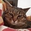 バロンさんのプロフィール画像