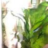 Amaneさんのプロフィール画像