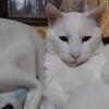 幸乃さんのプロフィール画像