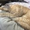 ネコネコさんのプロフィール画像