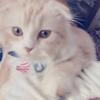 紺野さんのプロフィール画像