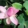 bouquetさんのプロフィール画像