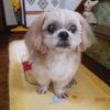 川越tomyさんのプロフィール画像