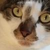 チァーリーマサさんのプロフィール画像