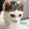 草ちゃんさんのプロフィール画像