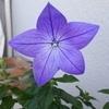 soratokumaさんのプロフィール画像