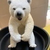 eva bearさんのプロフィール画像