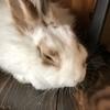 白兎さんのプロフィール画像