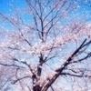 maemaさんのプロフィール画像