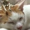 野良猫さんのプロフィール画像