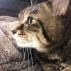 SNOOPYさんのプロフィール画像