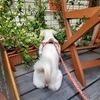 犬ともさんのプロフィール画像