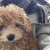 erinaさんのプロフィール画像
