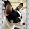 テオさんのプロフィール画像