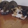 猫屋敷さんのプロフィール画像