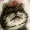 ふみさんのプロフィール画像