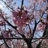 メノさんのプロフィール画像