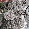 桜さんのプロフィール画像